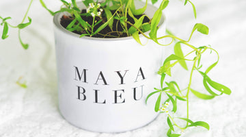(VIDEO tutorial) Planting Seeded Candle Duster in MAYA BLEU's Original Shark Tooth Candle