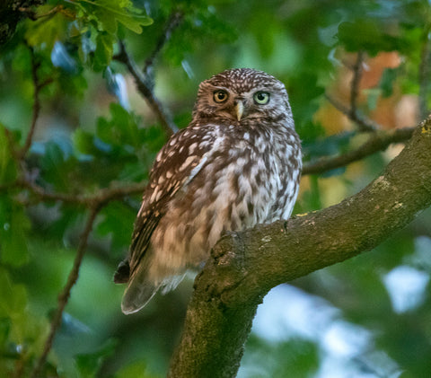 Biophilic Design Process - The Little owl