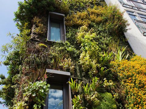 example of living walls - biophilic design