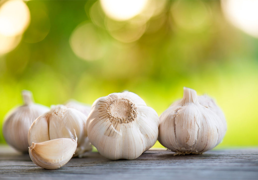 The Incredible Benefits of Garlic Extract