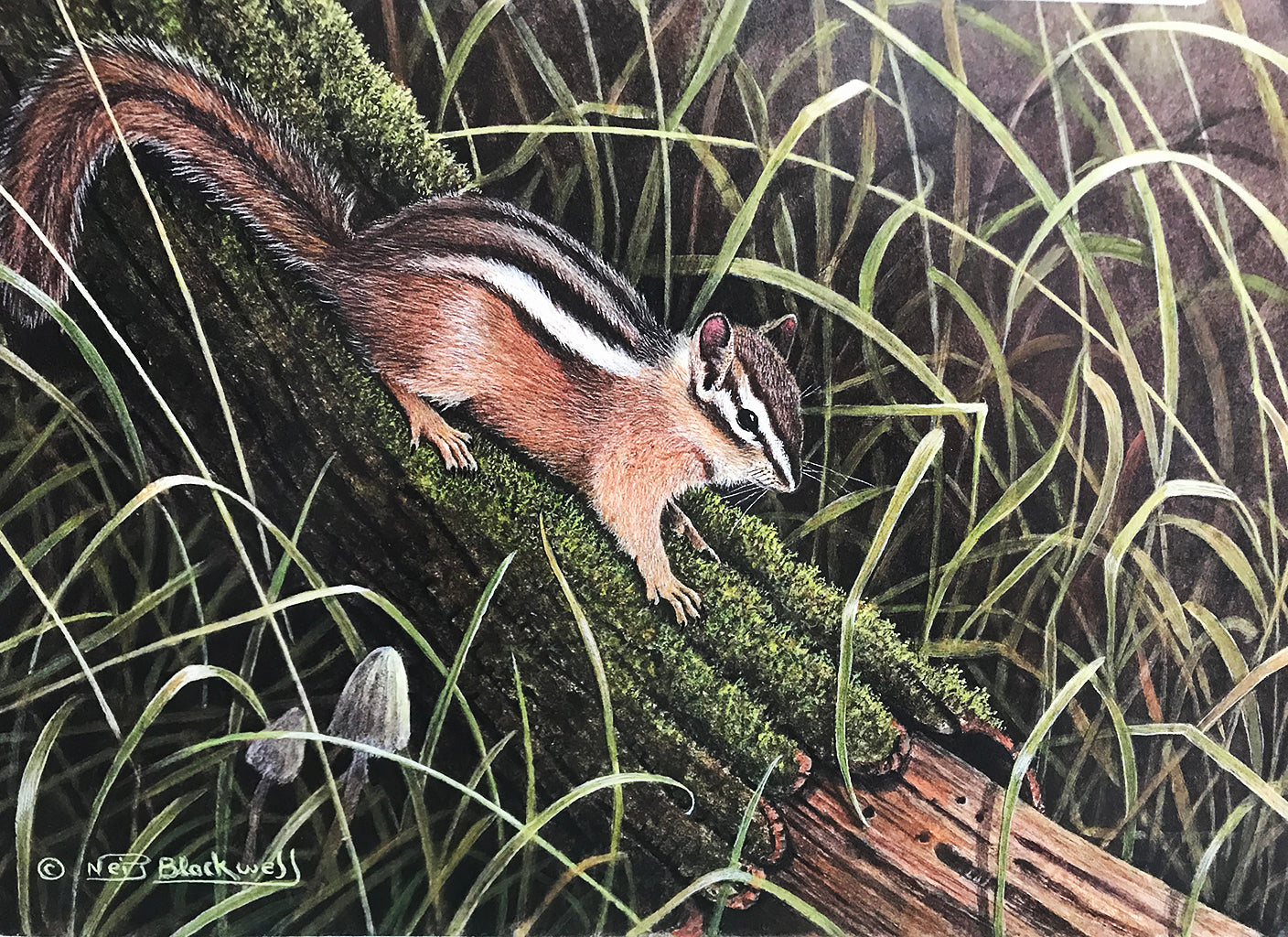 chipmunk print before Hollywood Rat redirected painting by Ange Beever