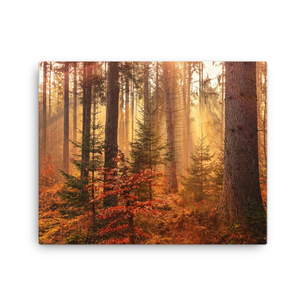 Forest Canvas - Guided Ascension