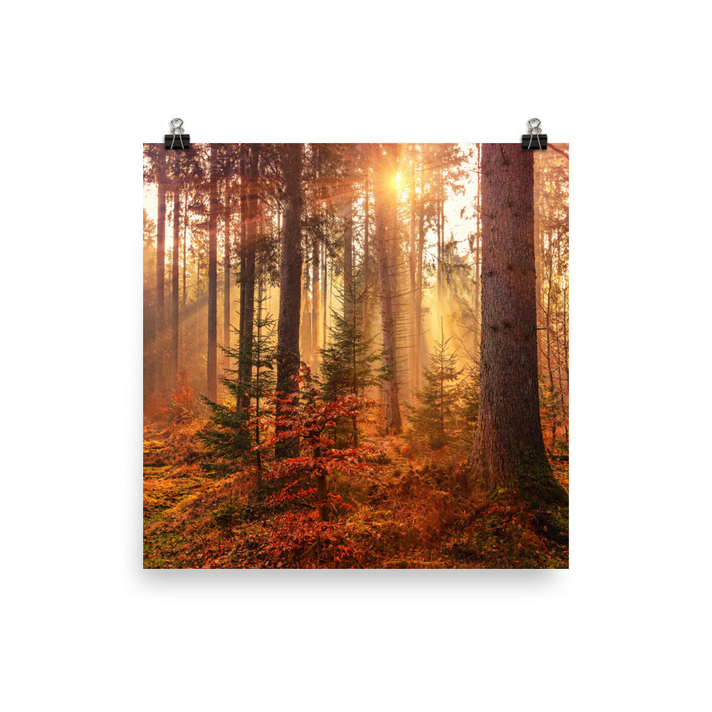Forest Canvas Poster