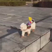 Load and play video in Gallery viewer, Pet Dog Costume