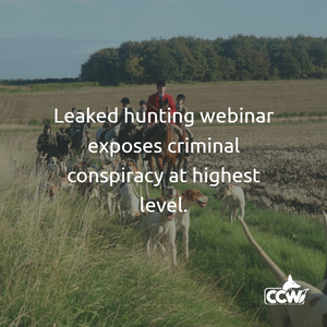 Leaked hunting webinar exposes possible criminal conspiracy at highest level.