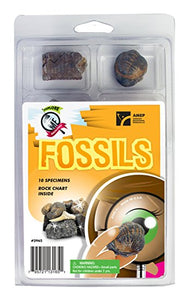 Explore With Me Geology Fossils