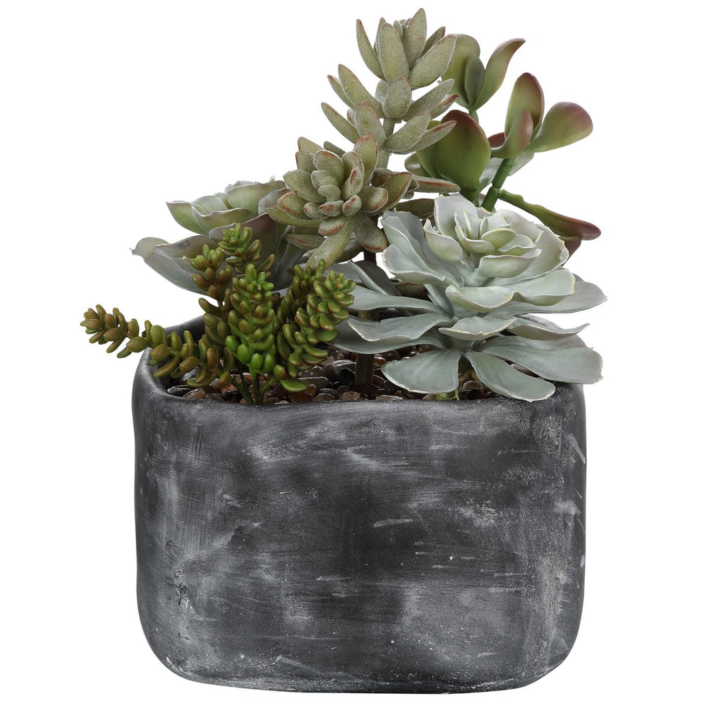 Shop Stacy Garcia, Succulents in Charcoal Concrete Planter