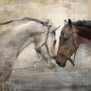 "Prinz Loving Horse Duo 30"" x 30"" Wrapped Canvas Wall Art"