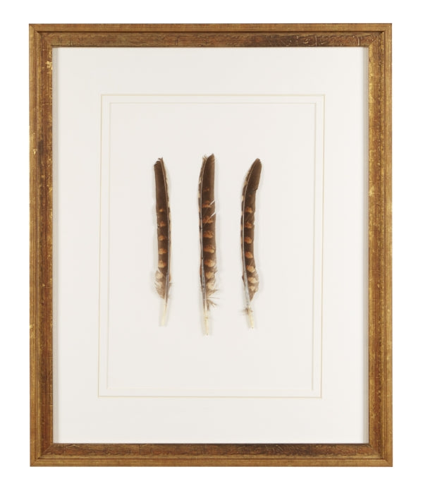 Framed Feathered Trio