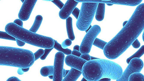 The Role of Probiotics in Gastrointestinal Disease and other Conditions – The Good, The Bad, and The Questionable- Institutional Price