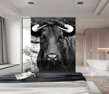 3D Black Cow 434 Wall Murals