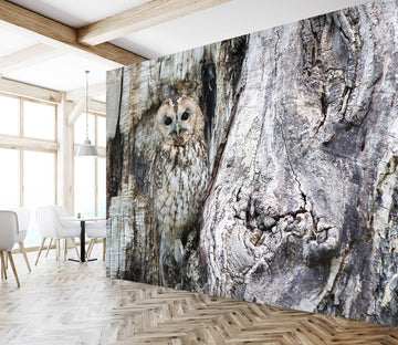 3D Black Owl 255 Wall Murals