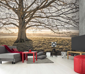 3D Sunshine Tree 072 Assaf Frank Wall Mural Wall Murals