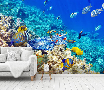 3D Blue Fish 362 Wall Murals