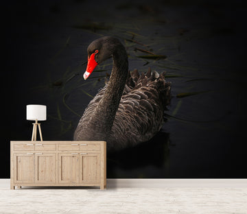 3D Black Swan 144 Wall Murals