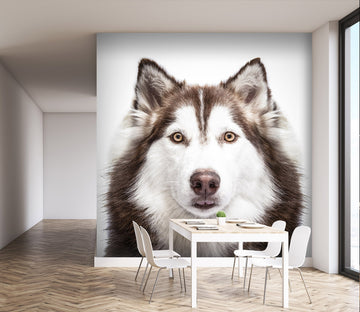 3D Black Dog 184 Wall Murals