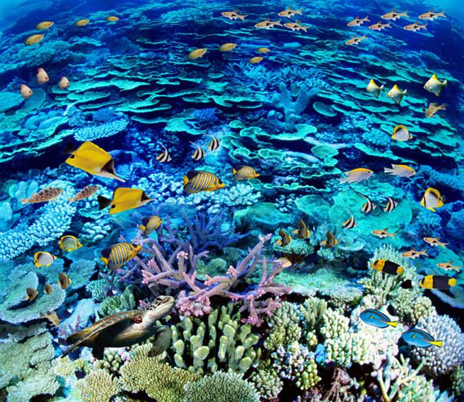 3D Bright Coral Sea Floor Mural Wallpaper AJ Wallpaper 2