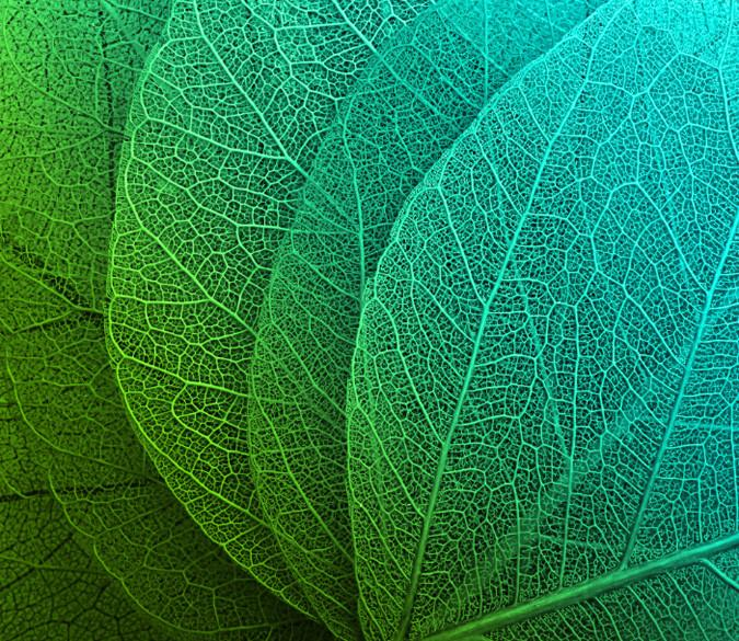 Leaf Veins 1 Wallpaper AJ Wallpaper