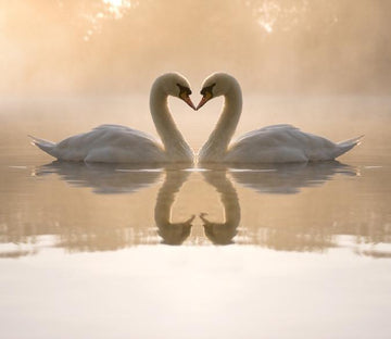 Kissing Swans - AJ Walls - 1
