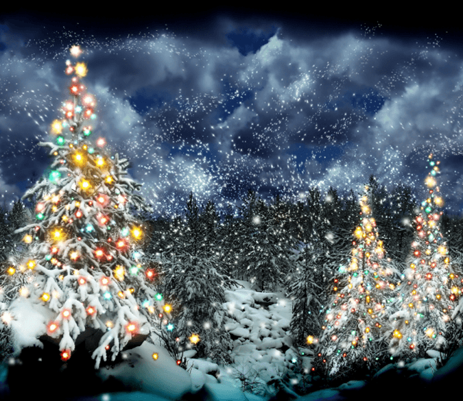 Christmas Trees Wallpaper AJ Wallpaper