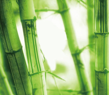 Fresh Bamboos Wallpaper AJ Wallpaper