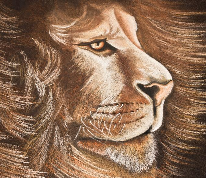 Long Hair Lion Wallpaper AJ Wallpaper