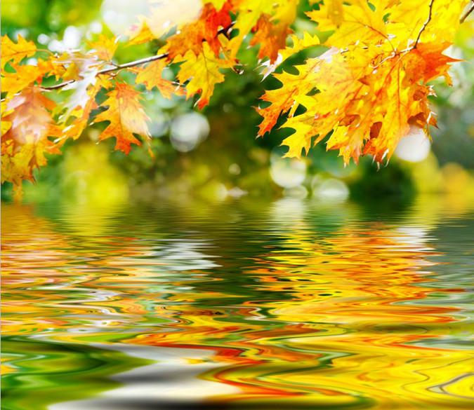 Hanging Maple Leaves Wallpaper AJ Wallpaper