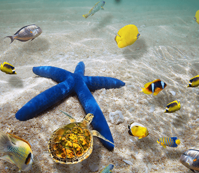 3D Blue Sea Star Floor Mural - AJ Walls - 1