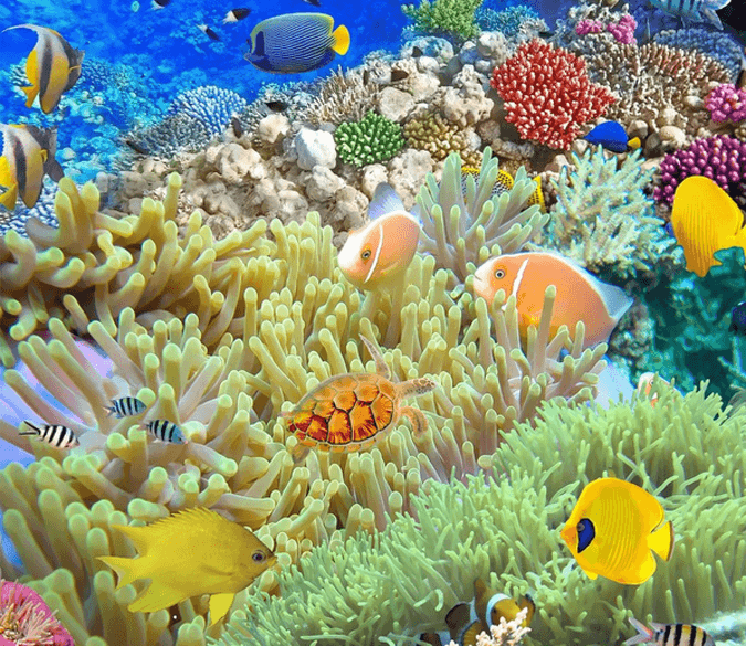 3D Beautiful Corals Floor Mural Wallpaper AJ Wallpaper 2