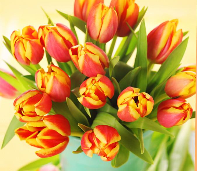 Beautiful Tulips Wallpaper AJ Wallpaper