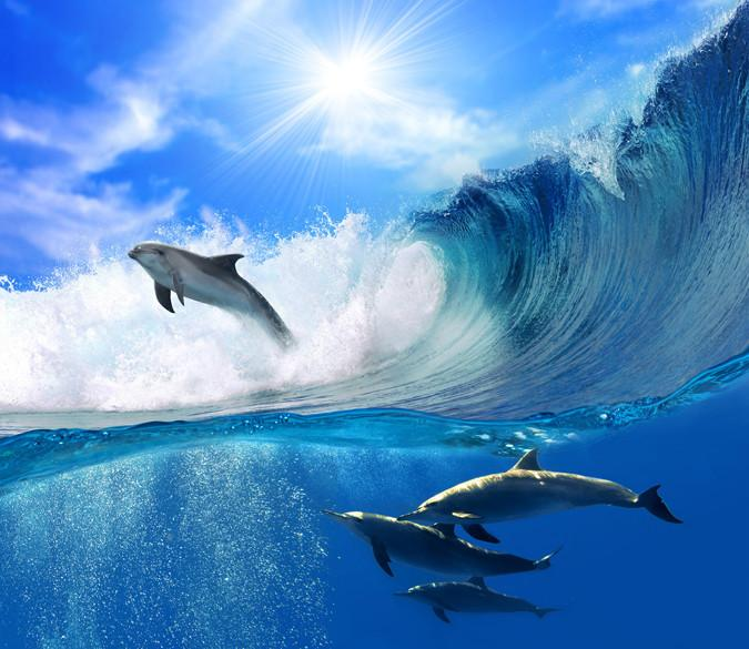 Surfing Dolphins Wallpaper AJ Wallpaper