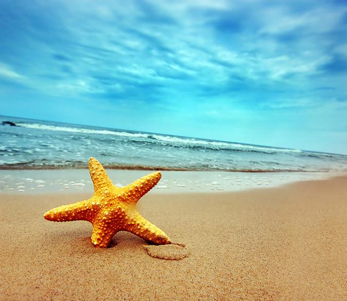Beach Seastar - AJ Walls - 1