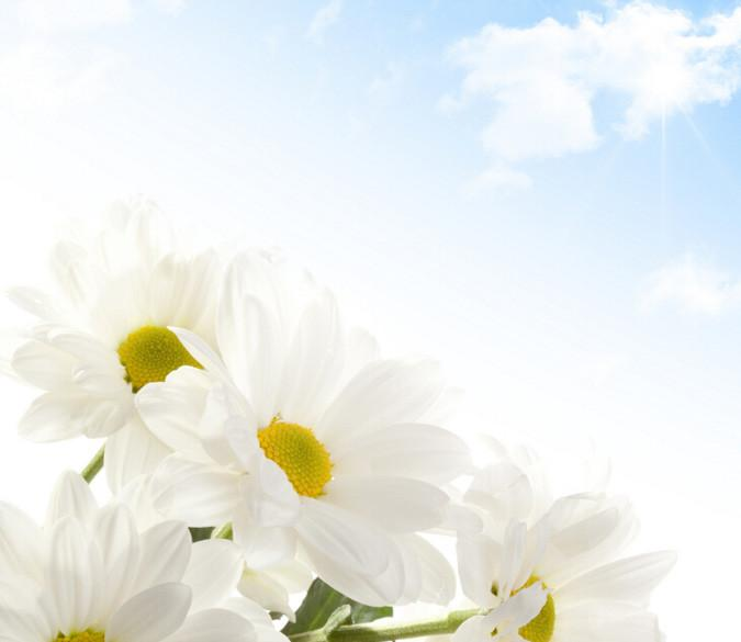 Elegant Flowers 6 Wallpaper AJ Wallpaper