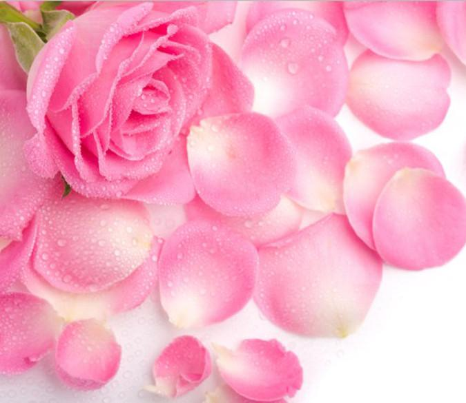 Romantic Pink Roses Wallpaper AJ Wallpaper