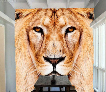 Lion Head - AJ Walls - 1