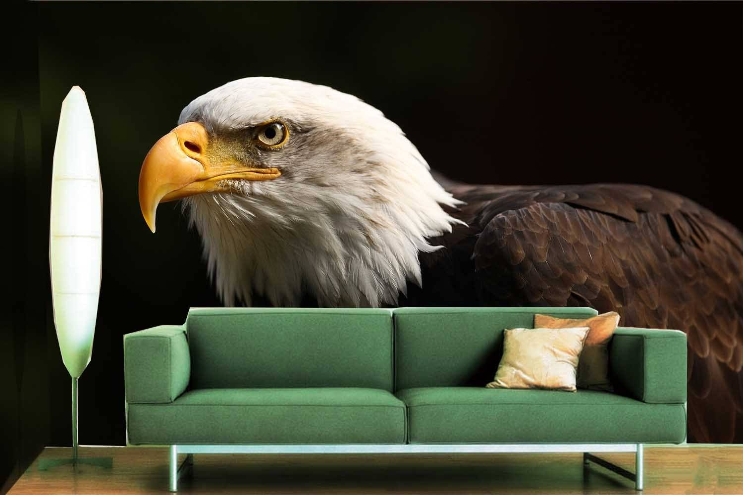 Beautiful Eagle 1 Wallpaper AJ Wallpaper