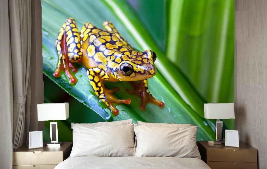 Colorful Frog - AJ Walls - 3