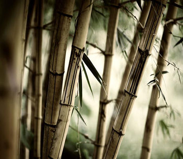 3D Bamboo Trunk Forest 221 Wallpaper AJ Wallpaper