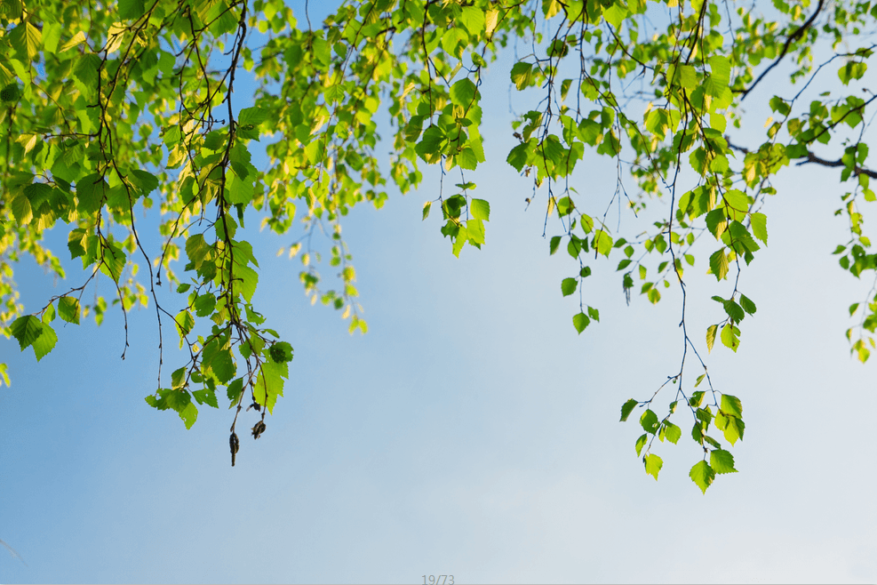 Falling Green Branches 1 Wallpaper AJ Wallpaper
