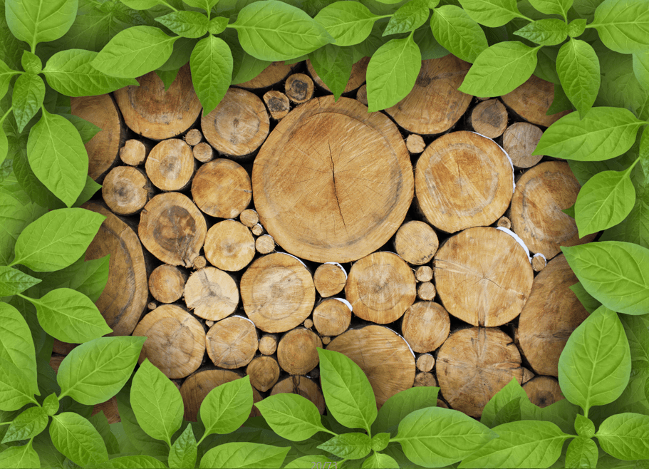 Tree Rings Wallpaper AJ Wallpaper