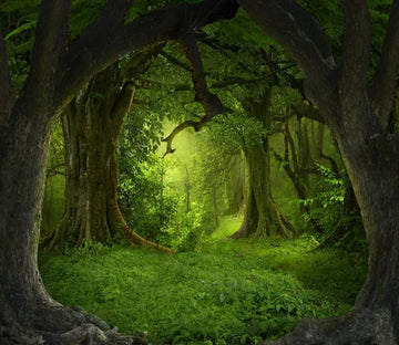 3D Ancient Forest 28 Wallpaper AJ Wallpaper