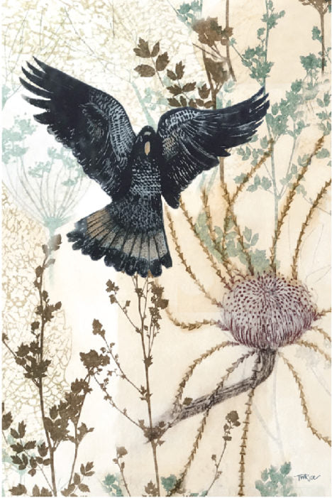 Tea Towel – Black Cockatoo