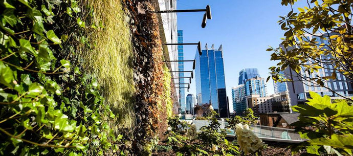 Andromeda Creates the Largest Greenwall Installation