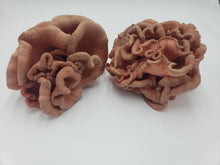 Load image into Gallery viewer, Rose Bud Pink Oyster Mushrooms
