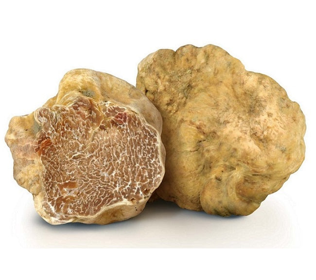 UPCOMING SEASON: Tartufo Bianco / Trifola Tuber magnatum Pico