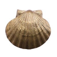 Pilgrim Scallop Shell Door Knocker