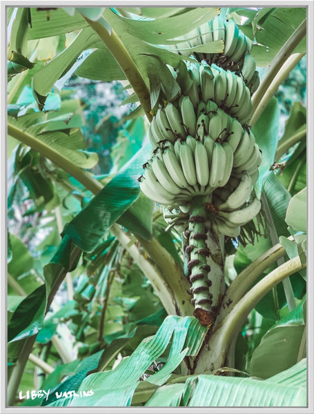 Banana Palm Photographic Print - By Libby Watkins