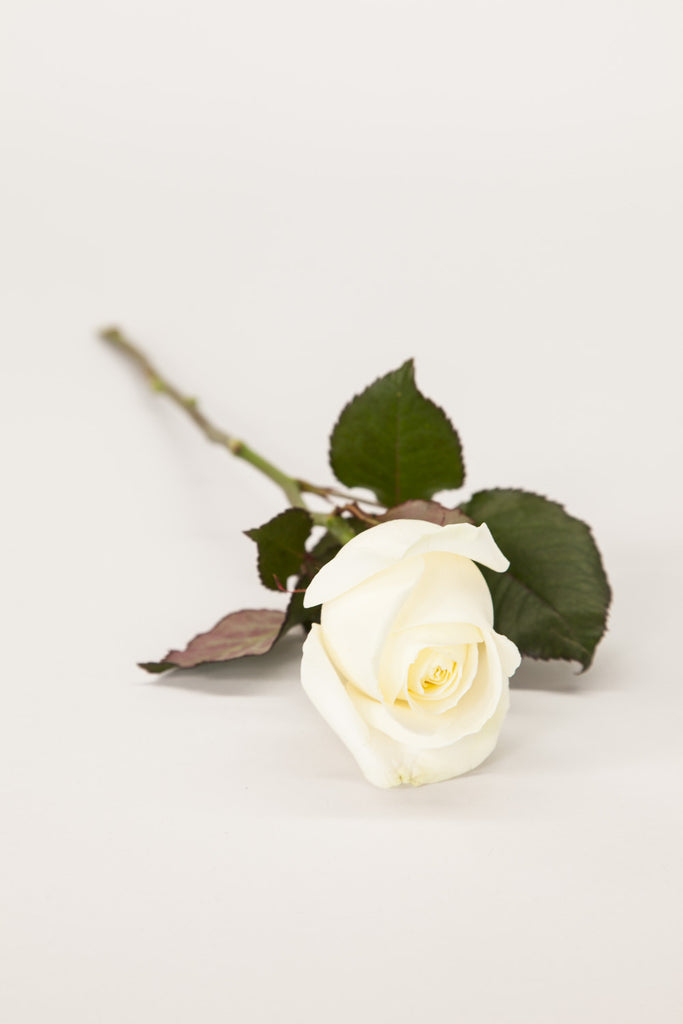 Single white naomi rose the signature florist single white naomi rose mightylinksfo
