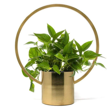 U at Home Hanging Planter-Gold