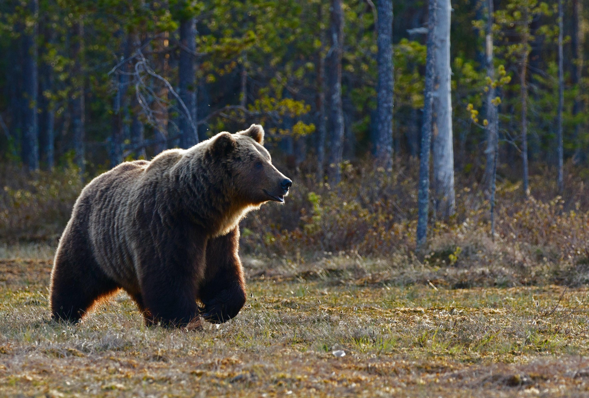 Top Tips for Avoiding Bears in the National Parks for 2020